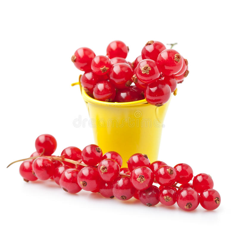 Download Red currant stock photo. Image of bunch, fruit, dieting - 24359076