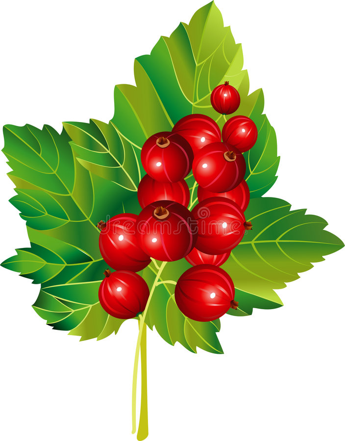Download Red currant stock vector. Illustration of green, leaf - 2592184