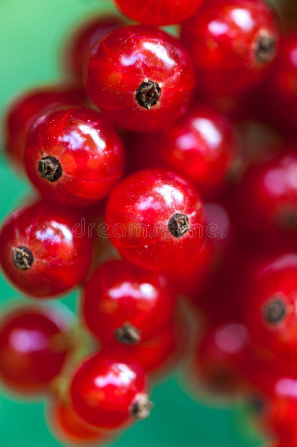 Download Red Currant stock photo. Image of health, healthy, sour - 26000944