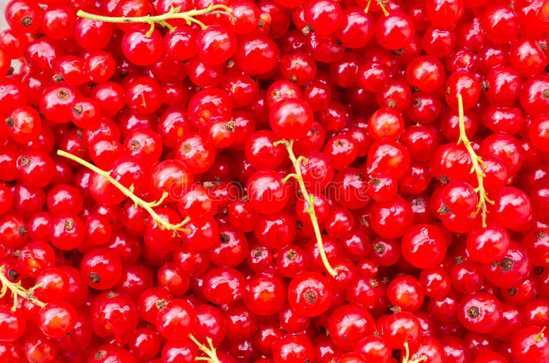 Download Red currant stock photo. Image of food, gardening, farm - 26813072