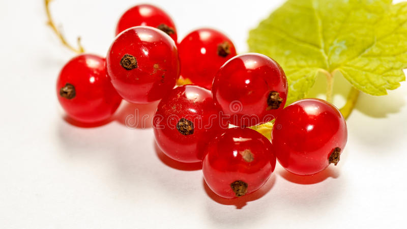 """Red currant. Berries are known as """"superfruits"""" as they have naturally high antioxidant capacity. s can be eaten fresh, cooked or dried. They can royalty free stock photo"""