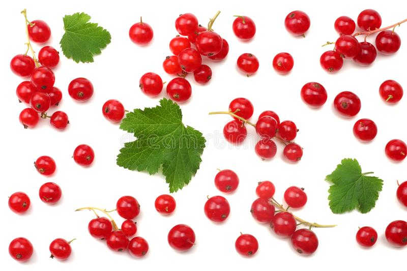 Red currant with green leaf isolated on a white background. healthy food. top view stock photos