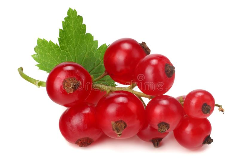 Red currant with green leaf isolated on a white background. macro. healthy food stock photos