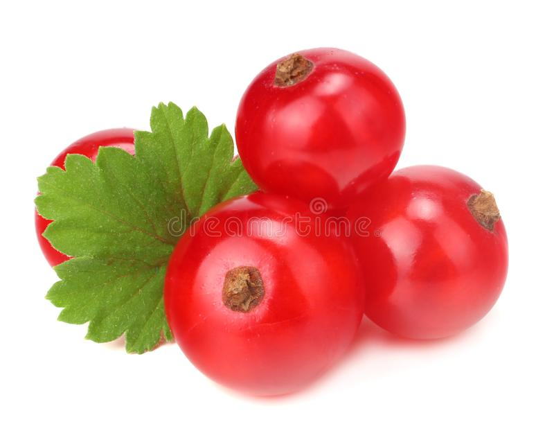 Red currant with green leaf isolated on a white background. macro. healthy food royalty free stock photo
