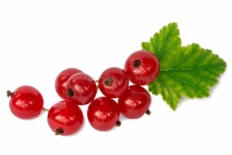 Red currant with green leaves isolated on white background. Juicy red currant with green leaves isolated on white background royalty free stock photo