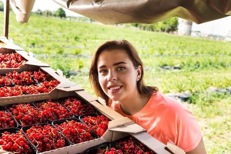 Red currant growers engineer working in garden with harvest, woman with box of berries stock photo