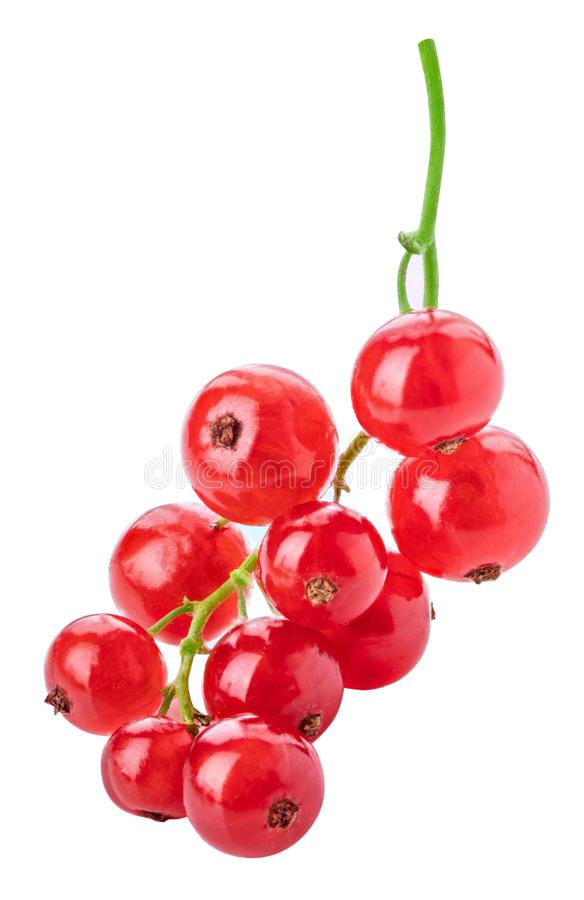 Red currant isolated on white background. Clipping path. Red currant isolated on white background royalty free stock image