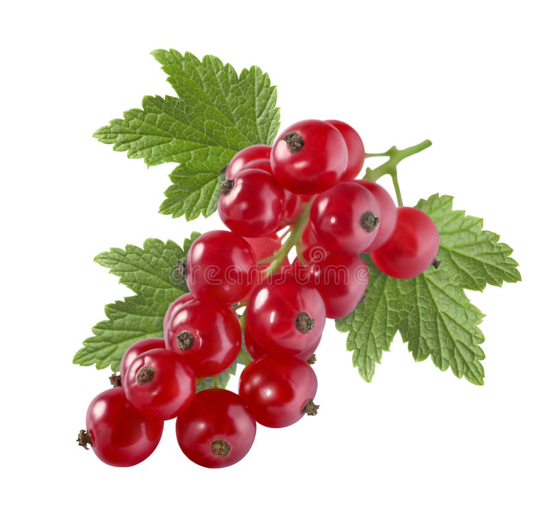 Red currant with leaf isolated on white background for packaging stock images