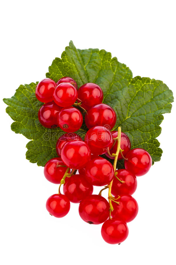 Download Red currant - red currant stock photo. Image of currant - 20030444
