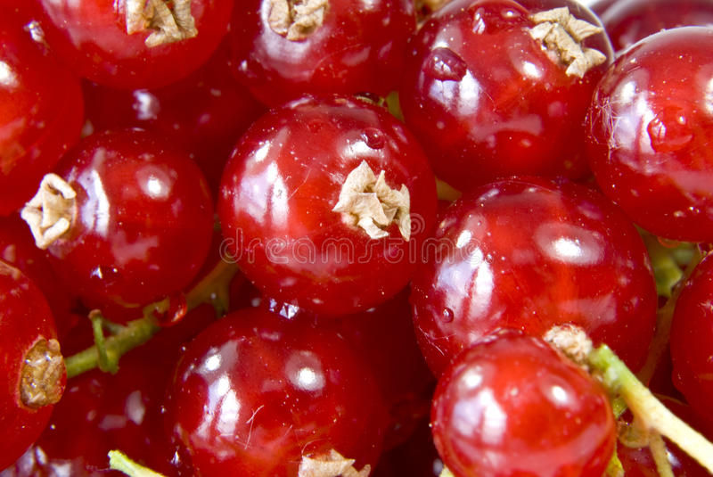 Download Red Currants Royalty Free Stock Images - Image: 15008409