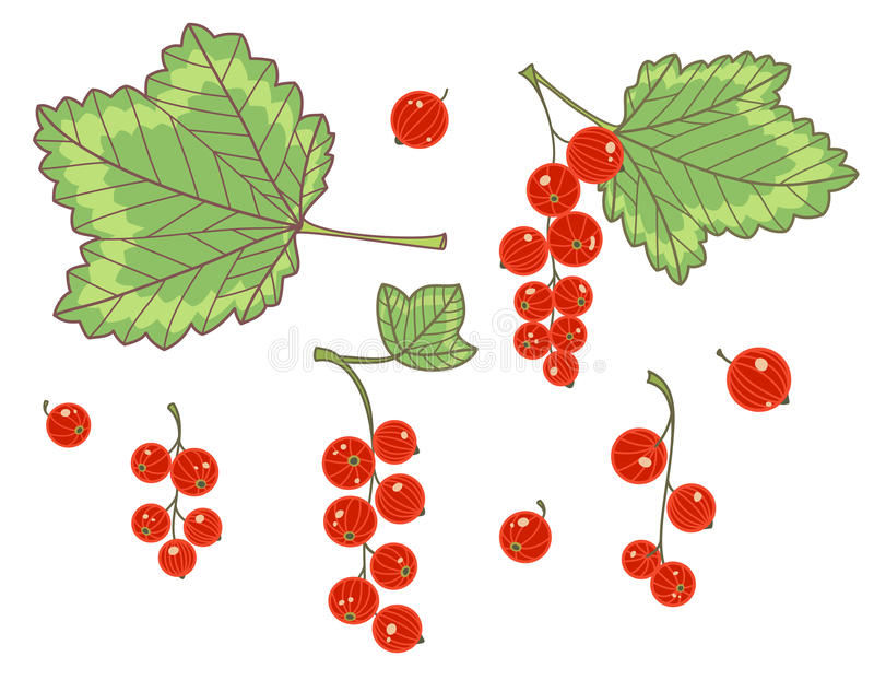 Red currants isolated