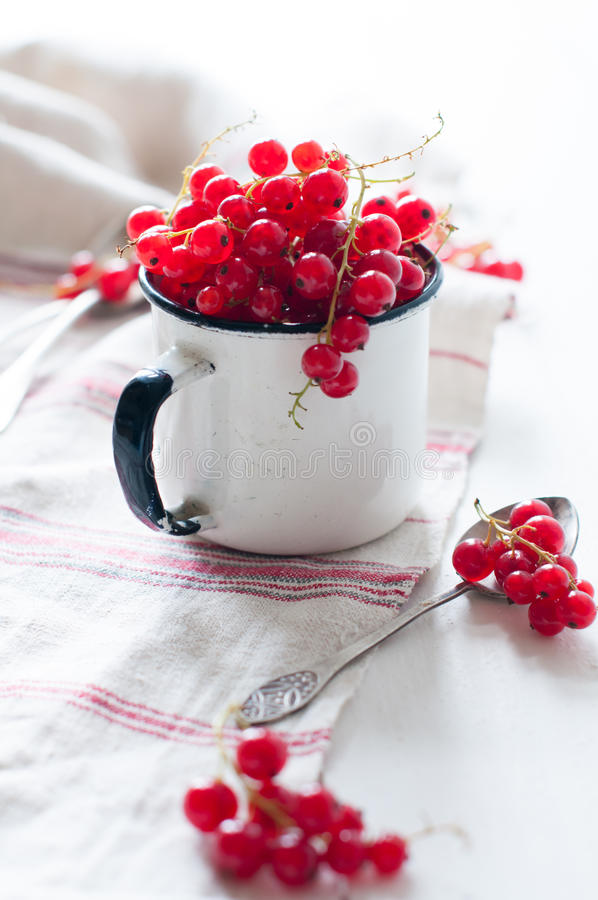 Download Red Currants In A White Enamel Mug Stock Image - Image: 41642569