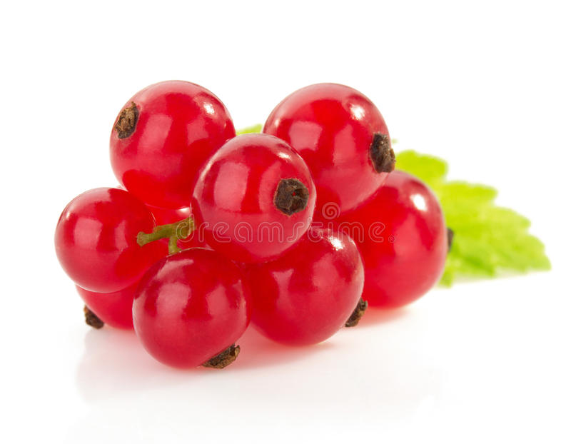 Red currants on white stock image