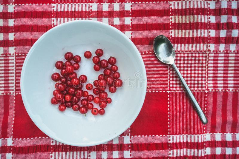 Red Currents on the table. Red currents sitting in a white bowl on a red and white tablecloth in a summer garden stock image