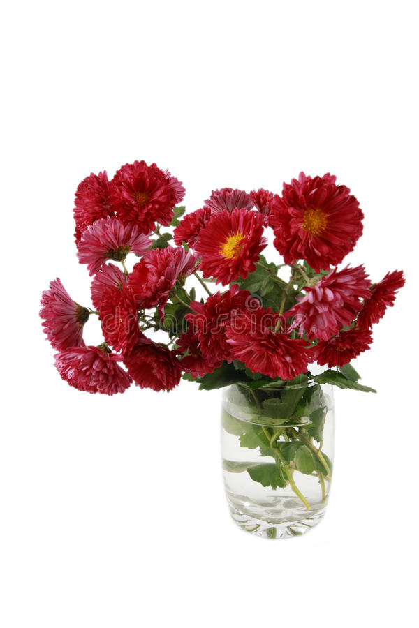 Download Red daisy stock photo. Image of bouquet, pattern, chrysanthemums - 12170562