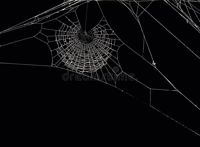 Red de la araña stock de ilustración