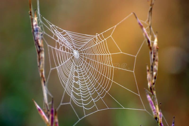 Red de la araña imagenes de archivo