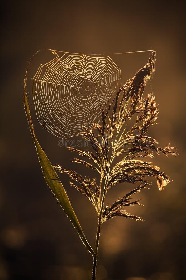 Red de la araña imagen de archivo libre de regalías