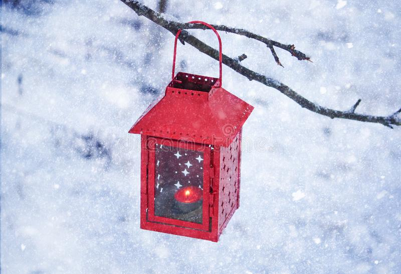 Red lantern hanging on the tree branch. Snowy winter morning in park. royalty free stock image