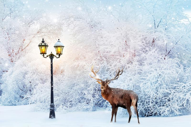 Red deer in a fabulous Christmas forest on a background of snowy trees and a lantern. Composite image. New Year card. Winter wonderland stock photo