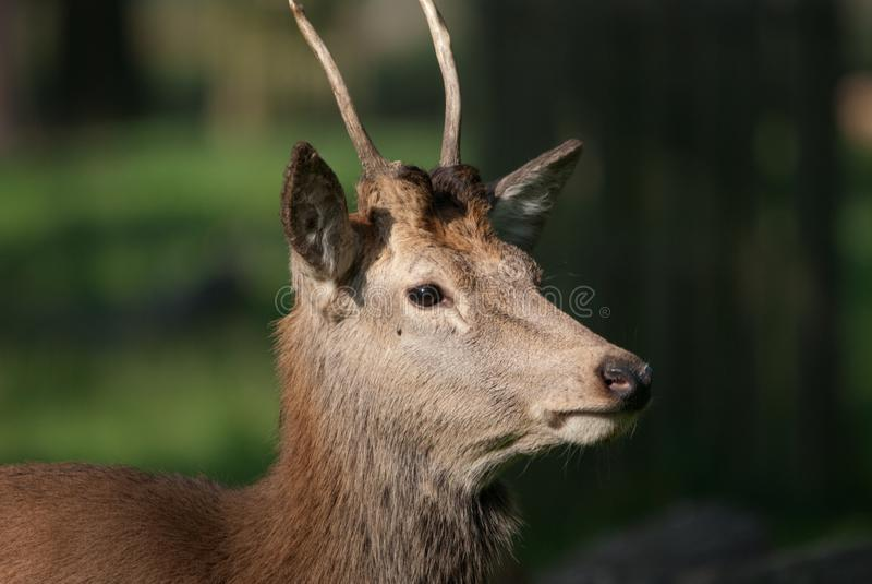 Alert Red Deer stock images