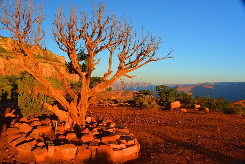Red desert stock photo