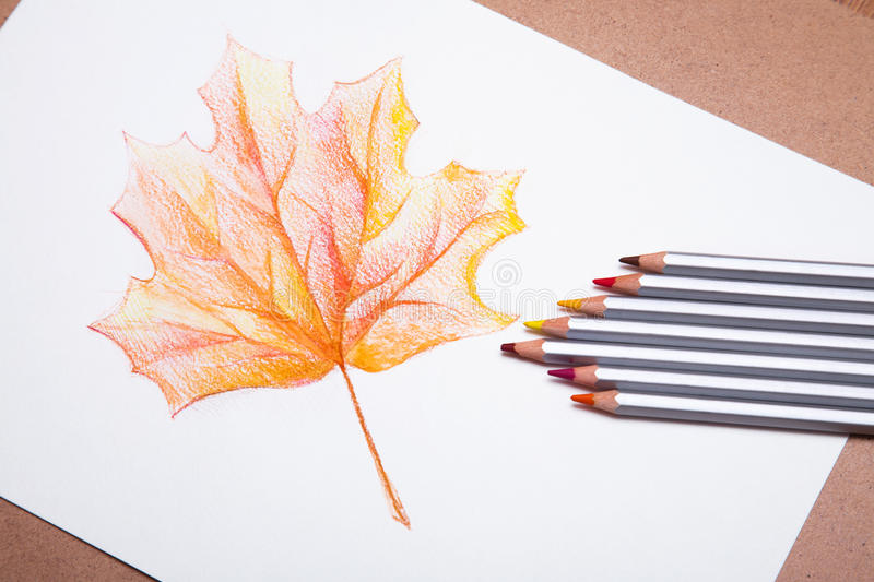 Red detailed maple tree leaf. On beige background hand drawn with color pencils