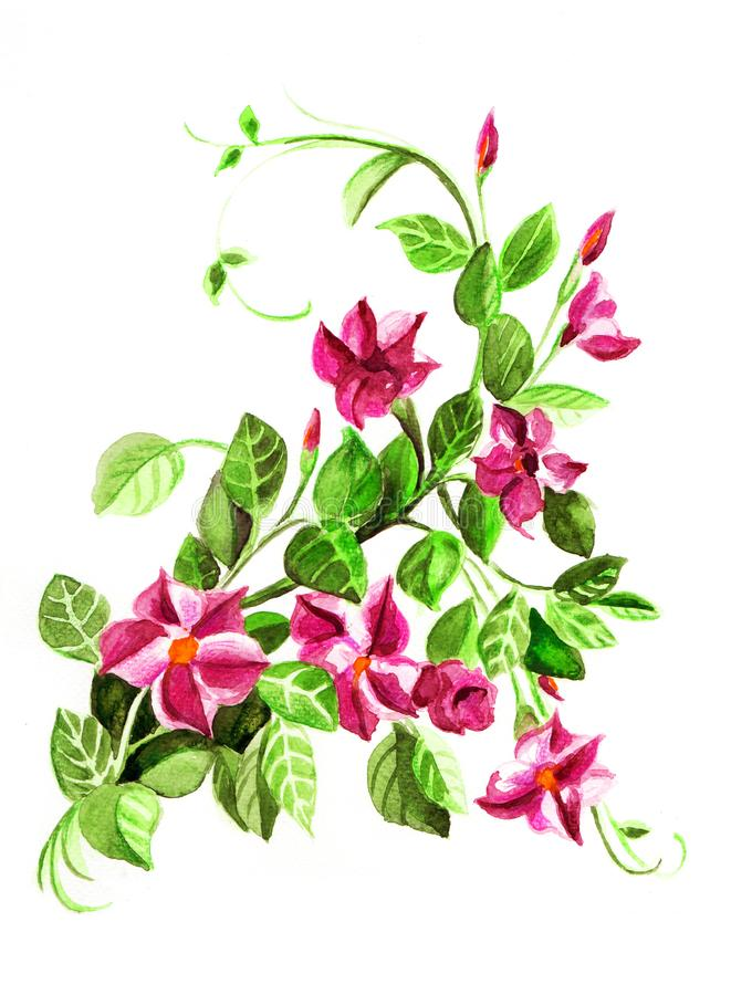 Red dipladeniya. Floral botanical flower. Wild spring leaf wildflower isolated. Red dipladeniya. Floral botanical flower. Wild spring leaf wildflower isolated stock illustration