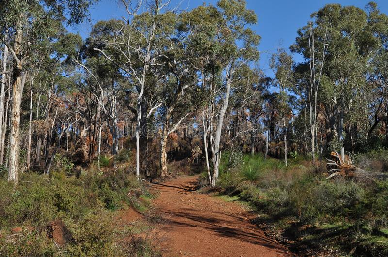 Red dirt track through Eucalyptus forest, Western Australia. Red dirt track through bushland on Whistlepipe Gully Walk, after controlled burning to help prevent stock photo