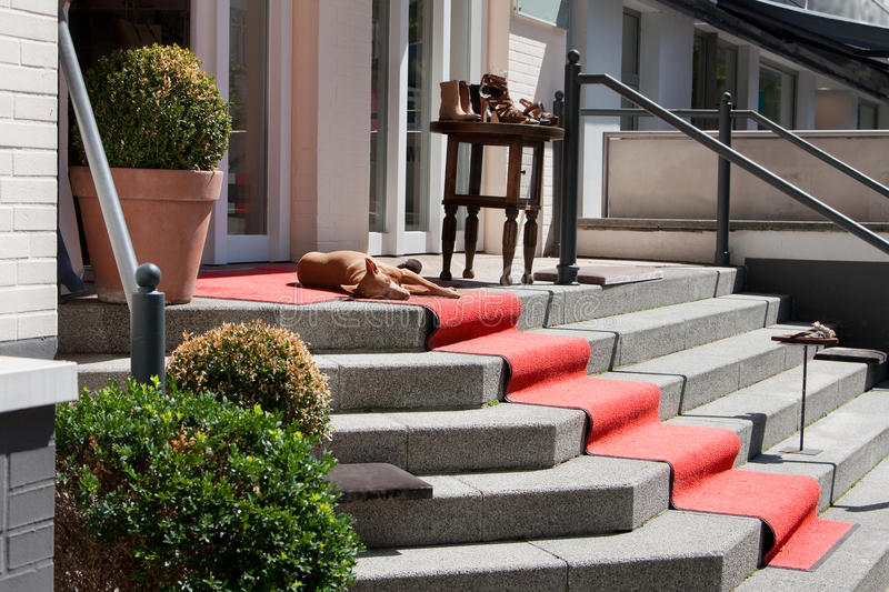Red dog sleeping in the sun on the red carpet spread out on the granite steps stock photo