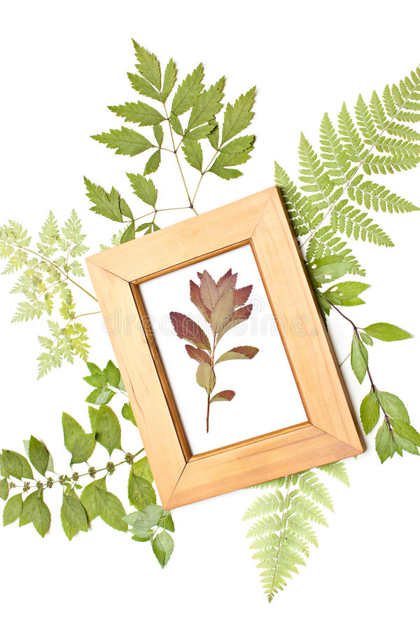 Red dried plant in a frame stock photography