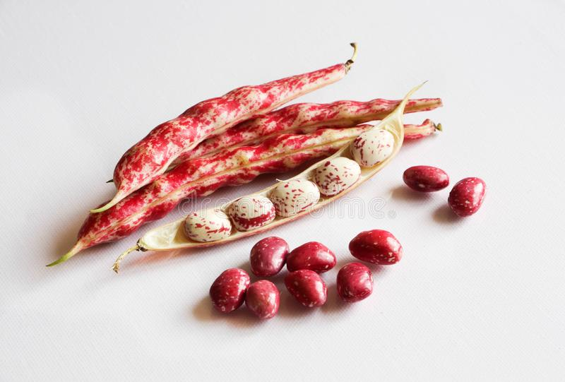 Red dry bean pods isolated on white stock image