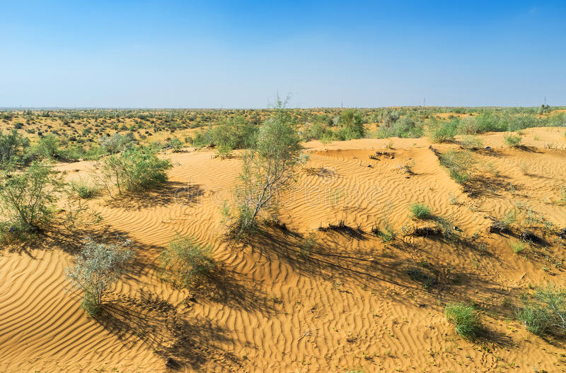 The red dune. The beautiful dune in Kyzyl covered with shrubs of saxaul (haloxylon), Uzbekistan royalty free stock photos