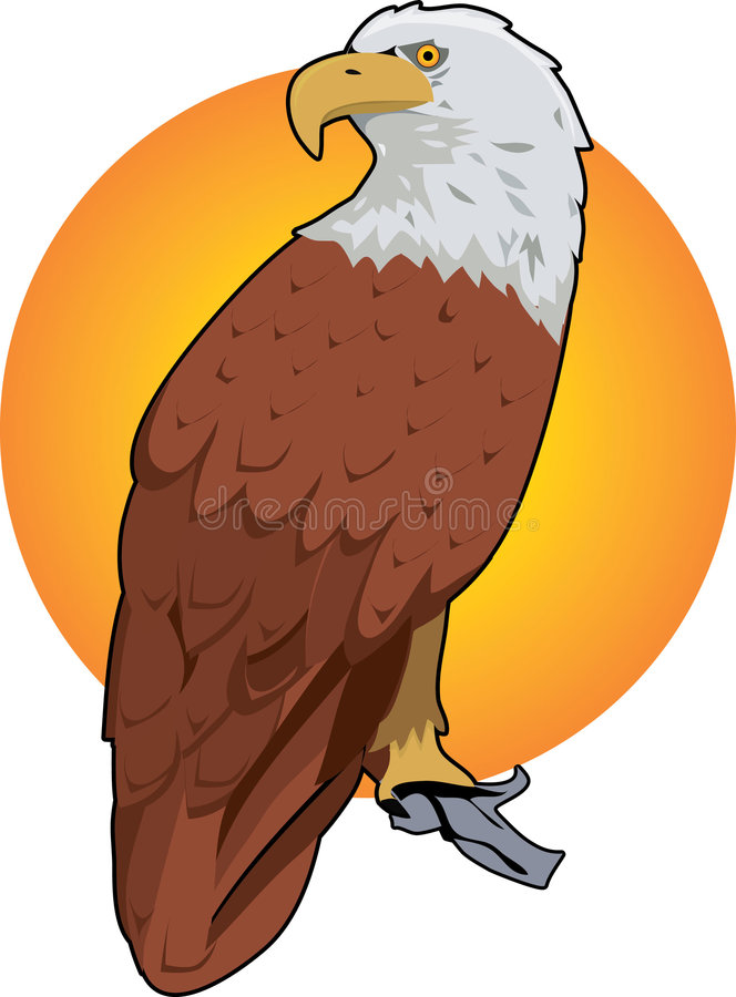 Red Eagle. Majestic red eagle on a branch with yellow background royalty free illustration