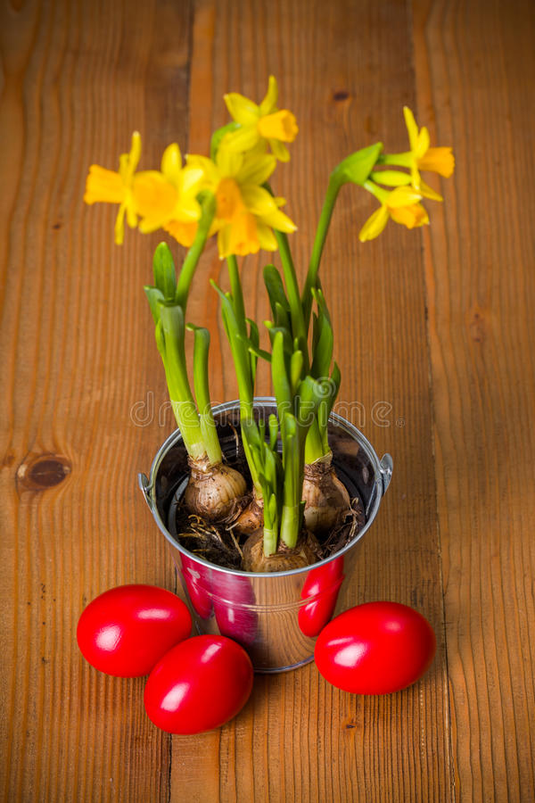Red Easter eggs and yellow daffodils. In tin pail on rustic board royalty free stock photography