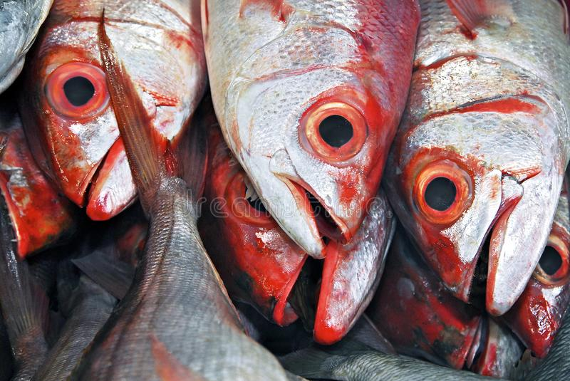 Red saltwater fish in the market royalty free stock photo