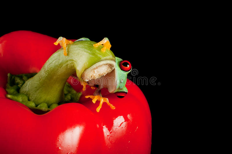 Red Eyed Frog Peeking Royalty Free Stock Images