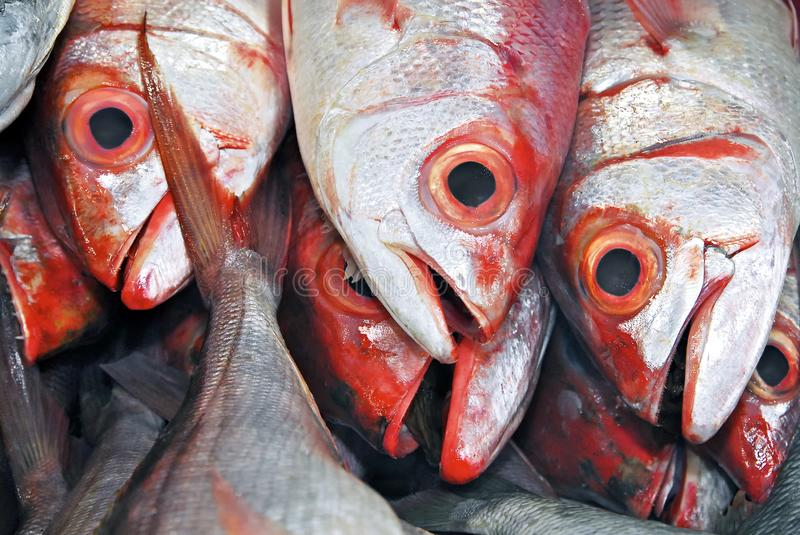 Red-eyed snapper fish at the Central Market in Puerto Princesa City, Philippines. Close-up of red colored common grouper fishes for sale at the Central Market in stock images