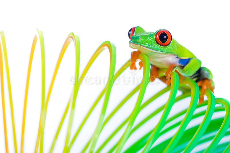 Red Eyed Tree Frog on a Spring Toy stock image