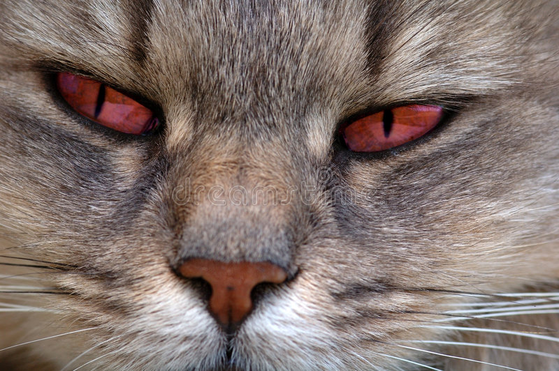 Download Red eyes cat stock image. Image of cats, evening, black - 1028989