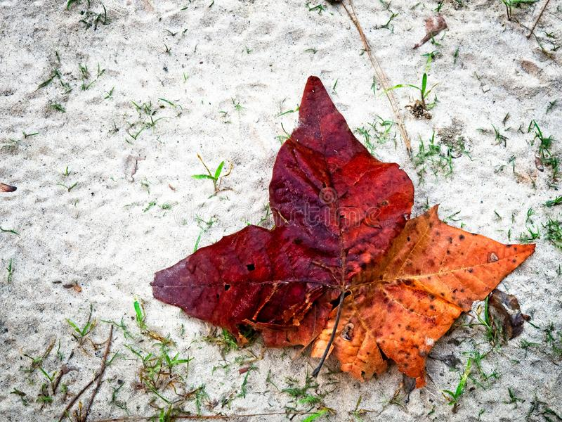 Red Fall Leaf on Sand royalty free stock images