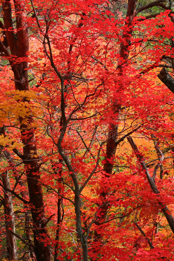Download Red Fall Leaves Royalty Free Stock Images - Image: 1714439