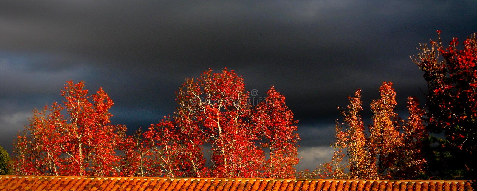 Red Fall Trees with Black Sky royalty free stock photography
