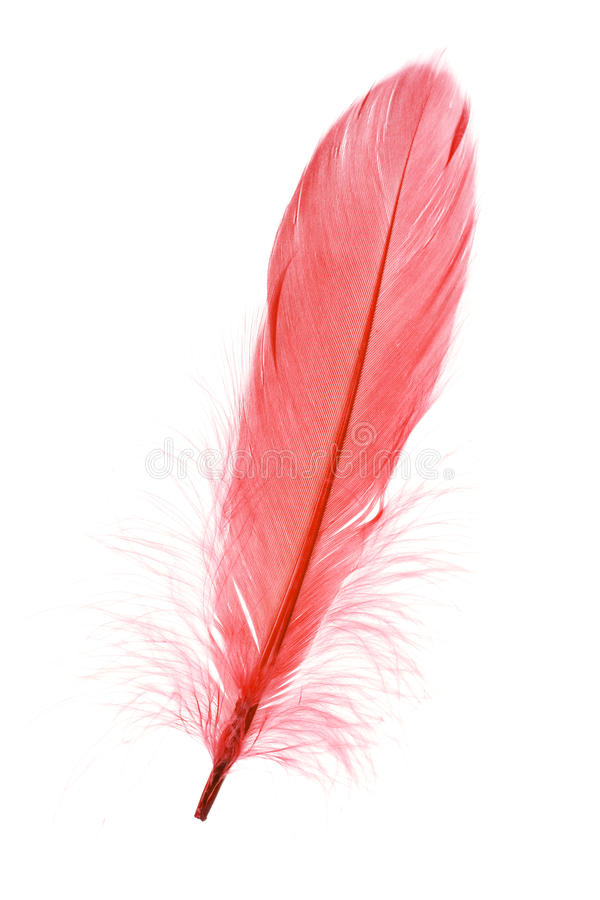 Download Red Feather stock photo. Image of softness, feathery, fluffy - 9839886