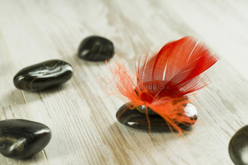 Red feather on black stones royalty free stock image
