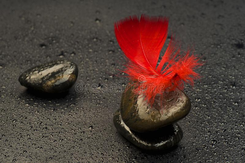 Red feather on stones relating to drops of water stock photography