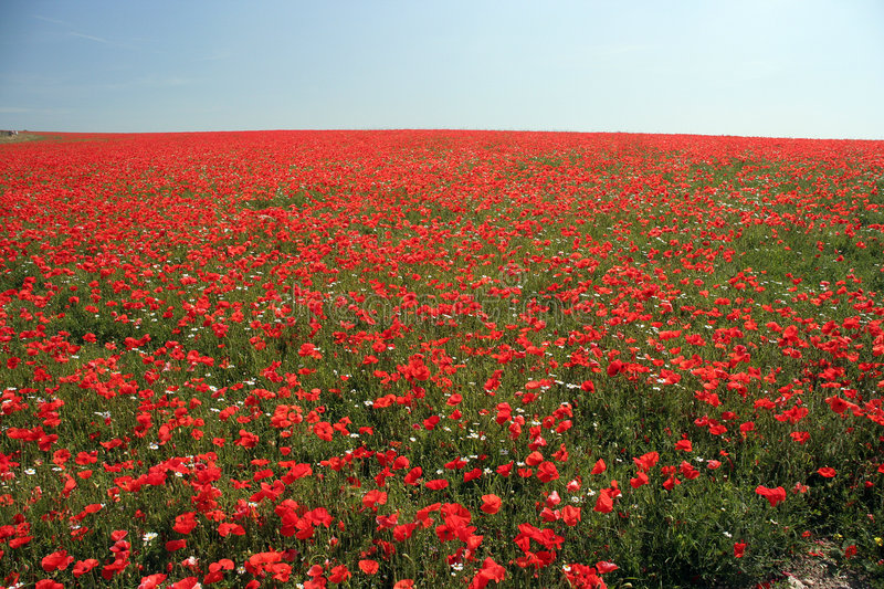 Red field royalty free stock images
