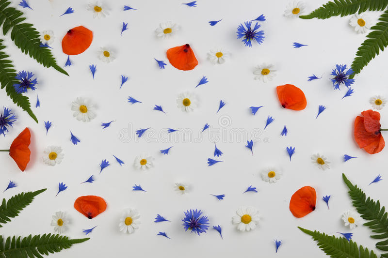 Red field poppies, daisies, cornflowers and green leaves frame on white background. royalty free stock photography