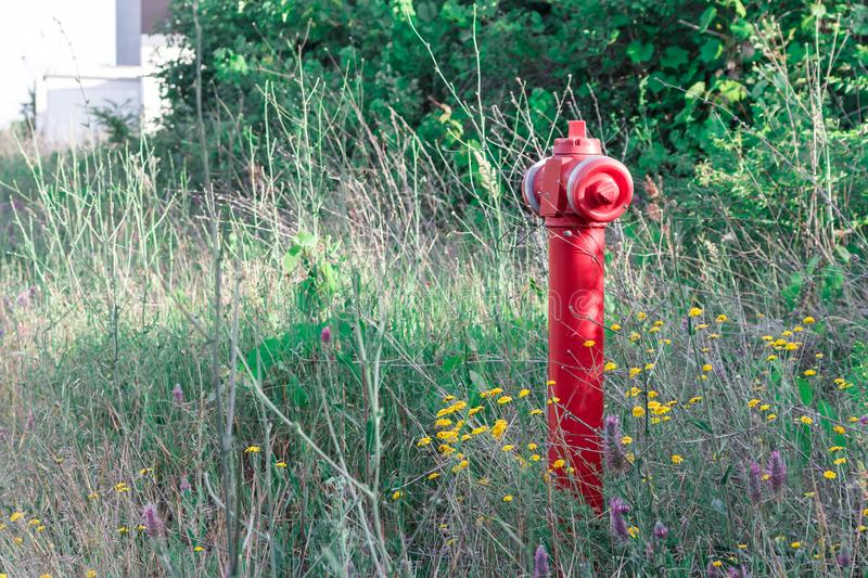 A red fire hydrant against a green lawn, bushes background. royalty free stock images