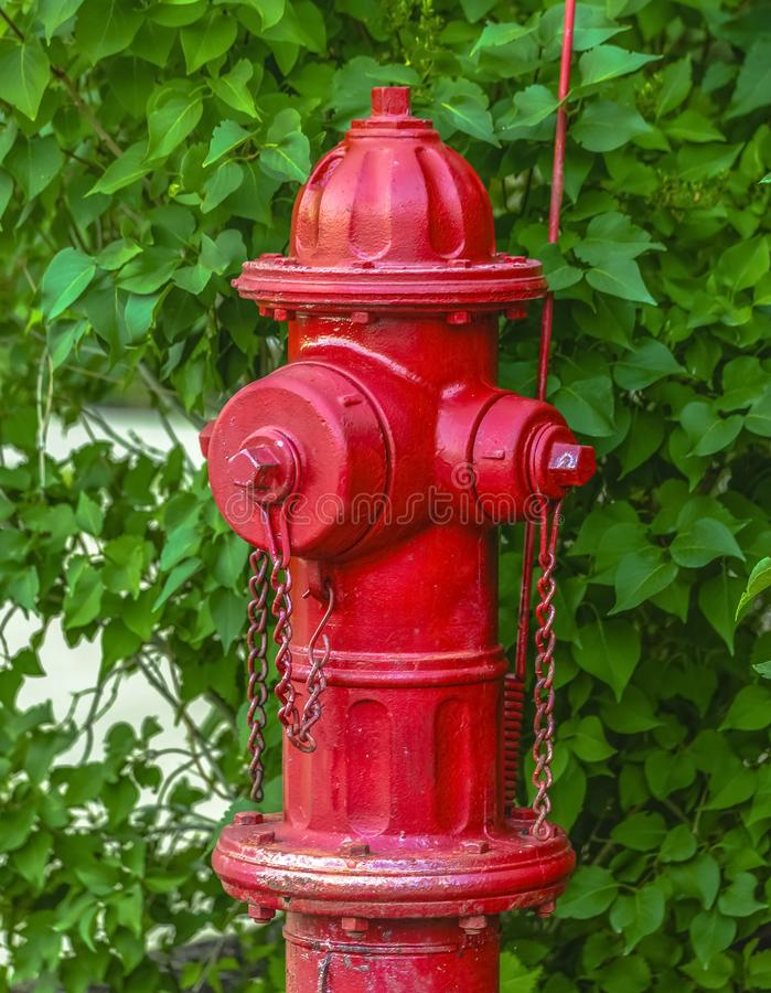 Red fire hydrant against vivid green leaves royalty free stock photo